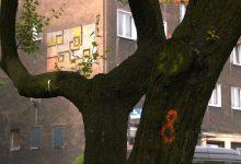 EkoMisja czerwiec 2019: Czy drzewa muszą zniknąć z miast?