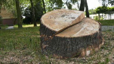 Ogromna wycinka drzew w Katowicach! A to nie koniec! Wytną kolejne [WIDEO]