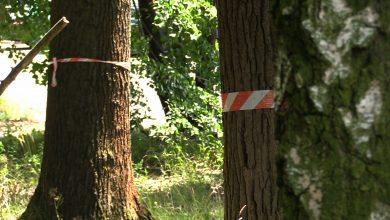 Szli w obronie drzew i Parku Śląskiego. Po głośnym wczorajszym Marszu Milczenia Dla Drzew deweloper odpiera zarzuty