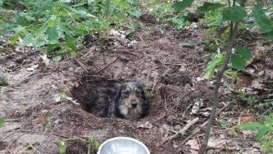 Pies zakopany żywcem w lesie. Policja poszukuje sprawcy (fot. Policja Podkarpacka)
