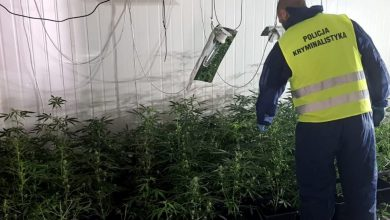 Ruda Śląska: Ogromna plantacja marihuany zlikwidowana (fot.policja)