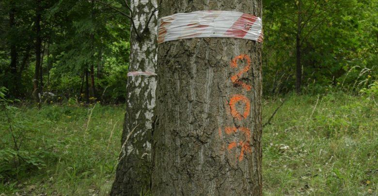 Decyzja zapadła, drzewa mają zostać wycięte. Pod koniec czerwca urząd miasta w Chorzowie wydał zgodę na wycinkę 1327 drzew znajdujących się na działce należącej do Green Park Silesia, tuż przy Parku Śląskim