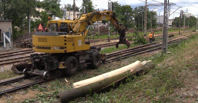 Trwa wycinka ok 4 tys. drzew wzdłuż linii kolejowej Cieszyn – Zebrzydowice. O zgodę na wycinkę wnioskowały PKP PLK