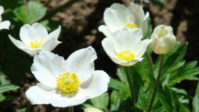 (fot. Świat Kwiatów)