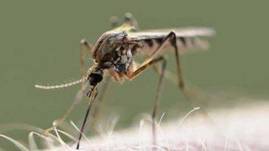 Wysyp komarów w Polsce! W jaki sposób chronić się przed owadami?