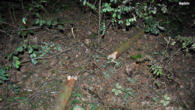 Zdjęcie przestawiające połamaną gałąź(fot. policja śląska)
