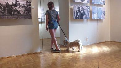 Kobieta prowadząca psa na smyczy w galerii sztuki (fot. Zamek Sielecki)