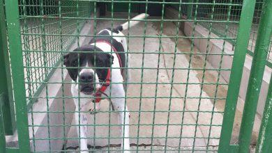 Zdjęcie psa ze schroniska. Rasa mieszana, kolor biało czarny (fot. Natalia Joanna Bajor)