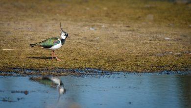 To już druga edycja akcji Łączą Nas Ptaki z inicjatywy Fundacji Psubraty. W grę wchodzą miliony żyć zagrożonych w Polsce ptaków migrujących (fot.poglądowe - pixabay.com)