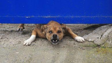 Wrzucił kota do kojca z psem. Zwierzę zostało zagryzione. 31-latek odpowie za znęcanie się nad zwierzętami (fot.poglądowe/www.pixabay.com)