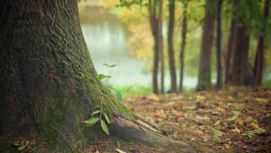 Poglądowe zdjęcie lasu (fot.pixabay.com)