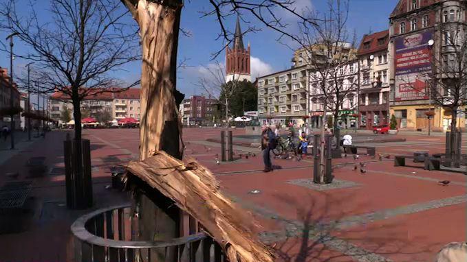 Bytom: Drzewa na rynku umierają! Wszystkie czeka wycinka?