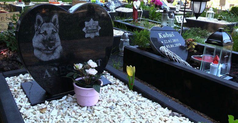 Cmentarz dla zwierząt w Katowicach. Na taki pomysł wpadli katowiccy radni
