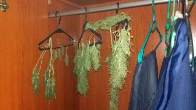 Taki widok zastali policjanci, gdy zapukali do drzwi 19-latka [FOTO] Chłopakowi grozi do 10 lat więzienia (fot.Policja Kujawsko-Pomorska)
