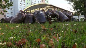Kubły na odpady biodegradowalne są za małe - mówią mieszkańcy Jaworzna i proszą o większe