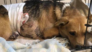Poszukiwany zwyrodnialec, który przebił psa widłami!!! (fot. Zaciszny tymczas/fb)