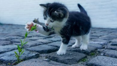 Bestia! Zdeptał trzy małe kotki, a ich matkę zadźgał nożem (foty.poglądowe/www.pixabay.com)