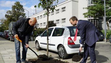 Katowice: Miasto posadzi jesienią tysiąc drzew (fot.UM Katowice)
