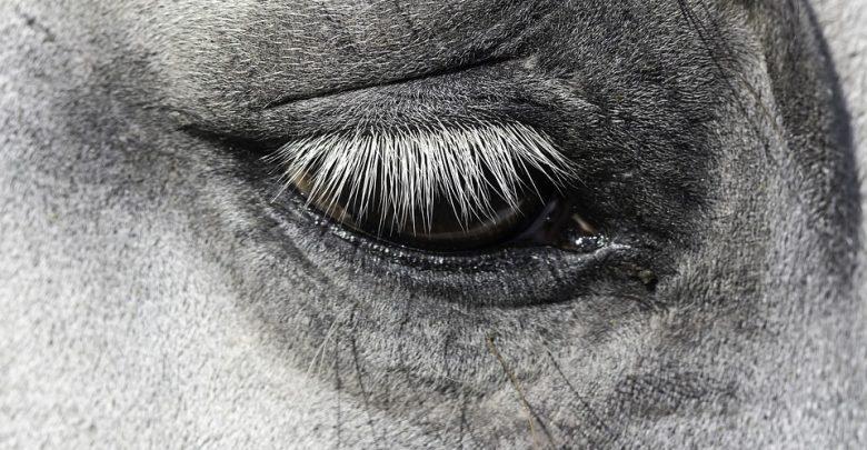 Śląskie: Zderzenie osobówki z koniem. Zwierzę nie przeżyło (fot.poglądowe/www.pixabay.com)