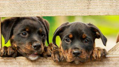 Wyrzucił dwa psy z okna znajdującego się na siódmym piętrze. Został skazany na rok więzienia (fot.poglądowe/www.pixabay.com)