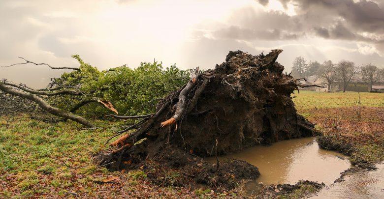 Śląskie: Jest OSTRZEŻENIE przed silnym wiatrem! Nawet 80 km/h (fot.pixabay.com-poglądowe)