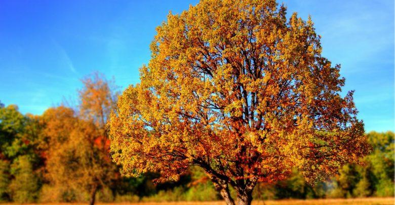 Byle do weekendu. Synoptycy zapowiadają 20 stopni. Później jeszcze cieplej (fot.poglądowe/www.pixabay.com)