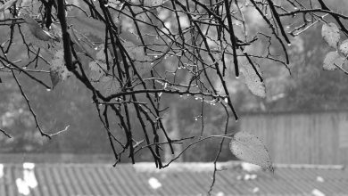Jesień nie sprzyja kierowcom. Tragiczny bilans na śląskich drogach (fot.poglądowe/www.pixabay.com)