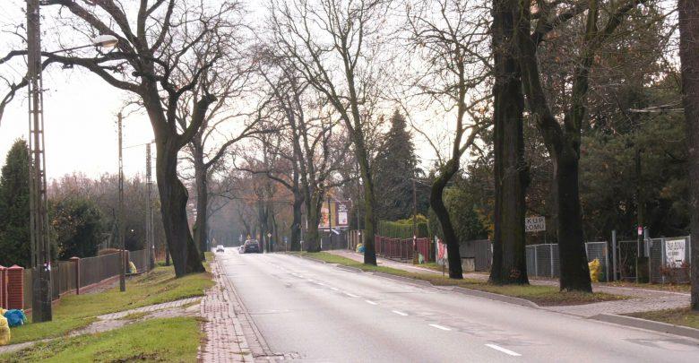 Setka dorodnych drzew pójdzie w Katowicach pod topór? Wycinka przy Owsianej budzi kontrowersje
