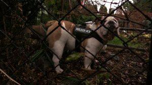 Gliwice: Spółdzielnia mieszkaniowa wprowadza zakaz wyprowadzania psów! Czy to legalne?