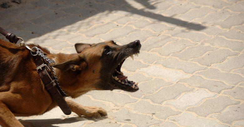 KOSZMAR! Kobieta w zaawansowanej ciąży zagryziona w lesie przez psy! (fot.pixxabay.com)