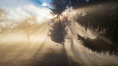 Gęsta mgła nad Śląskiem. IMGW wydało ostrzeżenie pierwszego stopnia. Prawdopodobne utrudnienia w ruchu drogowym (źródło: pixabay.com)