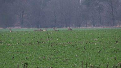 Kłusownicy dziesiątkują zwierzęta w śląskich lasach! Nikt nie jest w stanie ich powstrzymać?