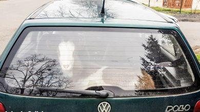 Pijany kierowca, poszukiwany pasażer, w bagażniku koza Frania! (fot.policja)