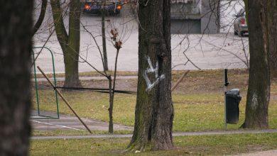 Katowice: Ruch Chorzów do góry nogami. Kibole zniszczyli drzewa!