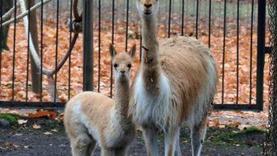Od 1 czerwca wraca chorzowskie zoo! Po pandemicznej izolacji, czas na odwiedziny u zwierząt! [fot. Zoo w Chorzowie]
