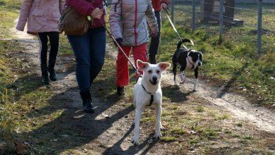 Będą biegać z psami po Gliwicach już 33 raz! Bieg na 6 Łap już 1 lutego Fot. materiały MZUK w Gliwicach