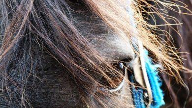Jastrzębie-Zdrój: koń biegał po centrum miasta! Uciekł właścicielowi ze stajni