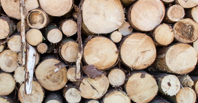Nowy rok i kolejne wycinki drzew w Katowicach (fot.poglądowe/www.pixabay.com)