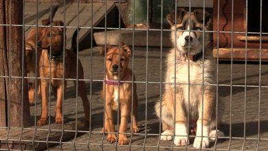 Ruda Śląska: Psy ze schroniska TOZ Fauna wywożone do Niemiec? Burza wokół bulwersującego wpisu