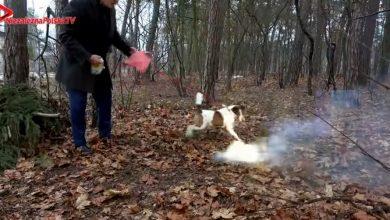 Janusz Korwin-Mikke nagrał kontrowersyjny zdaniem wielu film, na którym swojemu psu Odiemu rzuca odpalone fajerwerki (fot.youtube.com/NPTV)