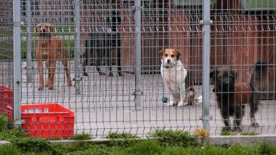 Zoofilia i eksperymenty to zwykły FAKE NEWS. Psy ze schroniska w Rudzie Śląskiej mają się dobrze