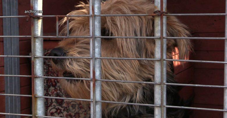 Śląskie: Epidemia wyrzucania zwierząt przez epidemię koronawirusa! Ludzie zwariowali!