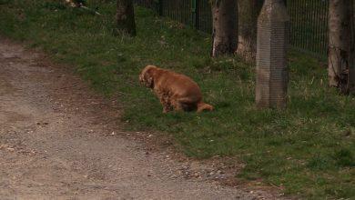 Dezynfekcja w Sosnowcu: Trzymajcie psy z daleka od odkażanych miejsc!