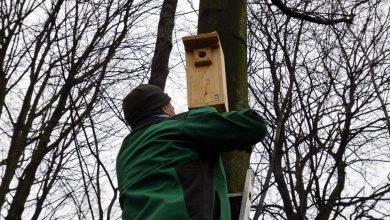 Mysłowice wieszają budki lęgowe dla ptaków. Fot. UM Mysłowice