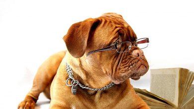 W USA zaczyna powoli brakować zwierzaków do adopcji. Ludzie biorą je by samotnie nie spędzać kwarantanny. [fot. www.pixabay.com]