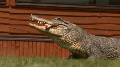 Prywatne ZOO Safari Borysew musiało ograniczyć liczbę pracowników. To tylko jeden z ogrodów zoologicznych które zostały zamknięte z powodu pandemii