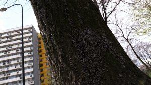 Katowice: Tajemnicze owady atakują Osiedle Tysiąclecia! Mieszkańcy przerażeni!
