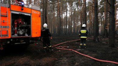 Śląskie: Strażacy dogaszają ogromny pożar lasów pod Częstochową. Straty ogromne!