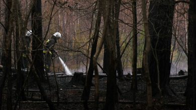 Śląskie: Lasy płoną jak pochodnia! Wszystko przez niemiłosierną suszę!