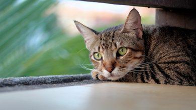 Kot zamknął swoich właścicieli na balkonie. Ratowała ich straż pożarna. Fot. poglądowe pixabay.com
